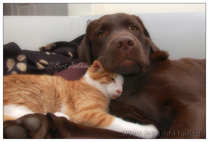 friends, dog, cat, hessel,friends,dog,cat,dogs,cats,cats and dogs,friendship,hessel,hannes,hessel en hannes,hessel and hannes,funny,petphotography,dogphotography,catphotography,hondenfotografie,kattenfotografie,huisdierenfotografie,vriend,vriendschap,hannes, hond, kat, vrienden,friendship,dog,cat,dogs,cats,hesselenhannes,hessel en hannes, hessel and hannes,