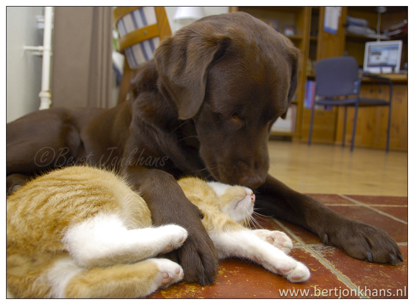 friends, dog, cat,friends,dog,cat,dogs,cats,cats and dogs,friendship,hessel,hannes,hessel en hannes,hessel and hannes,funny,petphotography,dogphotography,catphotography,hondenfotografie,kattenfotografie,huisdierenfotografie,vriend,vriendschap,hessel, hannes, hond, kat, vrienden,friendship,dog,cat,dogs,cats,hesselenhannes,hessel en hannes, hessel and hannes,