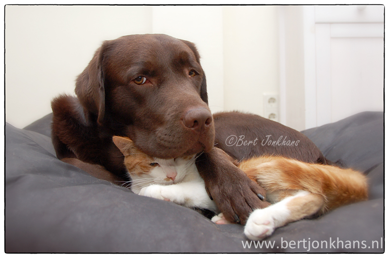 friends, dog, cat, hessel,friends,dog,cat,dogs,cats,cats and dogs,friendship,hessel,hannes,hessel en hannes,hessel and hannes,funny,petphotography,dogphotography,catphotography,hondenfotografie,kattenfotografie,huisdierenfotografie,vriend,vriendschap, hannes, hond, kat, vrienden,friendship,dog,cat,dogs,cats,hesselenhannes,hessel en hannes, hessel and hannes,