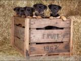 Jack Russel,,hond,dog,dogs,huisdierenfotografie,hondenfotografie,pet,petphotography,dogphotography