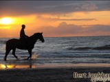 sundown,beach,paard,strand,zee,horse,beach,sundown,
