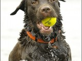labradorhond,dog,dogs,huisdierenfotografie,hondenfotografie,pet,petphotography,dogphotography