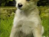 husky,hond,dog,dogs,huisdierenfotografie,hondenfotografie,pet,petphotography,dogphotography