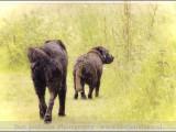 labrador,labradors,,hond,dog,dogs,huisdierenfotografie,hondenfotografie,pet,petphotography,dogphotography