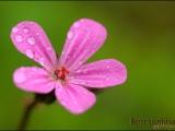 bloem,tui,macro,voorjaar,
