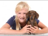 teckel,dachshund,dog,hond,