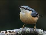 boomklever,vogel,natuur,bird,nuthatch