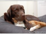 friends,friends,dog,cat,dogs,cats,cats and dogs,friendship,hessel,hannes,hessel en hannes,hessel and hannes,funny,petphotography,dogphotography,catphotography,hondenfotografie,kattenfotografie,huisdierenfotografie,vriend,vriendschap,dog, cat, hessel, hannes, hond, kat, vrienden,friendship,dog,cat,dogs,cats,hesselenhannes,hessel en hannes, hessel and hannes,