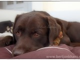 friends, dog, cat, hessel,friends,dog,cat,dogs,cats,cats and dogs,friendship,hessel,hannes,hessel en hannes,hessel and hannes,funny,petphotography,dogphotography,catphotography,hondenfotografie,kattenfotografie,huisdierenfotografie,vriend,vriendschaphannes, hond, kat, vrienden,friendship,dog,cat,dogs,cats,hesselenhannes,hessel en hannes, hessel and hannes,
