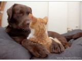 friends, dog, cat, hesselfriends,dog,cat,dogs,cats,cats and dogs,friendship,hessel,hannes,hessel en hannes,hessel and hannes,funny,petphotography,dogphotography,catphotography,hondenfotografie,kattenfotografie,huisdierenfotografie,vriend,vriendschap hannes, hond, kat, vrienden,friendship,dog,cat,dogs,cats,hesselenhannes,hessel en hannes, hessel and hannes,