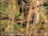 sparrowhawk,sperwer,roofvogel,natuur,vogel,bird,