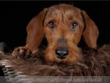 ,hond,honden,dog,dogs,huisdierenfotografie,petphotography,dogphotography