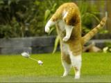 Europese korthaar,huisdierenfotografie,kattenfotografie,petphotography,catphotography,cat,