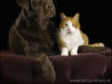 friends, dog,friends,dog,cat,dogs,cats,cats and dogs,friendship,hessel,hannes,hessel en hannes,hessel and hannes,funny,petphotography,dogphotography,catphotography,hondenfotografie,kattenfotografie,huisdierenfotografie,vriend,vriendschap,cat, hessel, hannes, hond, kat, vrienden,friendship,dog,cat,dogs,cats,hesselenhannes,hessel en hannes, hessel and hannes,
