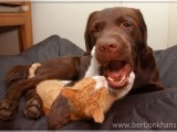 friends,dog,cat,dogs,cats,cats and dogs,friendship,hessel,hannes,hessel en hannes,hessel and hannes,funny,petphotography,dogphotography,catphotography,hondenfotografie,kattenfotografie,huisdierenfotografie,vriend,vriendschap