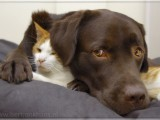 friends,dog,cat,dogs,cats,cats and dogs,friendship,hessel,hannes,hessel en hannes,hessel and hannes,funny,petphotography,dogphotography,catphotography,hondenfotografie,kattenfotografie,huisdierenfotografie,vriend,vriendschap,3hesselandhannes