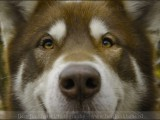 hond,honden,dog,dogs,huisdierenfotografie,petphotography,dogphotography