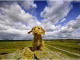 hond,dog,teckel,dachshund,olav,wirehaired miniature dachshund,ruwhaar dwerg teckel,distelbelt,diffelen,