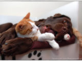 friends,dog,cat,dogs,cats,cats and dogs,friendship,hessel,hannes,hessel en hannes,hessel and hannes,funny,petphotography,dogphotography,catphotography,hondenfotografie,kattenfotografie,huisdierenfotografie,vriend,vriendschap,#hesselandhannesfriends,dog,cat,dogs,cats,cats and dogs,friendship,hessel,hannes,hessel en hannes,hessel and hannes,funny,petphotography,dogphotography,catphotography,hondenfotografie,kattenfotografie,huisdierenfotografie,vriend,vriendschap,#hesselandhannes