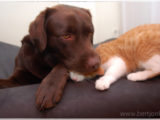 vfriends,dog,cat,dogs,cats,cats and dogs,friendship,hessel,hannes,hessel en hannes,hessel and hannes,funny,petphotography,dogphotography,catphotography,hondenfotografie,kattenfotografie,huisdierenfotografie,vriend,vriendschap,#hesselandhannes