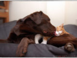 friends,dog,cat,dogs,cats,cats and dogs,friendship,hessel,hannes,hessel en hannes,hessel and hannes,funny,petphotography,dogphotography,catphotography,hondenfotografie,kattenfotografie,huisdierenfotografie,vriend,vriendschap,#hesselandhannes