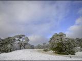 beerze bulten,snow,sneeuw,landschap,landscape